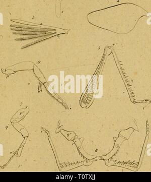 Eine Lektüre in die Entomologie - Stockfoto