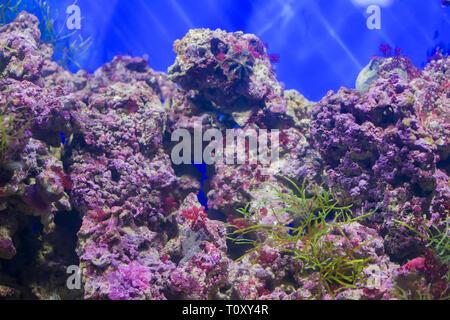 Bunte Korallen Hintergrund - Stockfoto