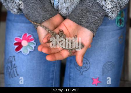 Girl holding Eidechse in der Hand - Stockfoto