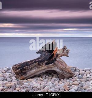 Treibholz auf Spey Strand und den Moray Firth, Moray, Schottland, Großbritannien - Stockfoto