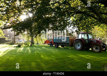 Baum Chirurgen entfernen von Ästen und Sie zu dem Baum chipper vor Holzeinschlag - Stockfoto