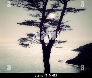 Fotografische Kunst: Combe Point in der Nähe von Dartmouth, Devon, Großbritannien - Stockfoto