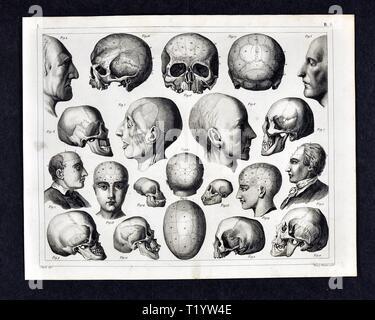 1849 medizinischen Abbildung der menschlichen Anatomie mit Schwerpunkt auf den Schädel und Kopf - Stockfoto