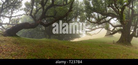 Fanal Wald - Stockfoto