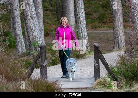 Einen weiblichen Hund Walker walking ein Husky Hund über eine Brücke über einen Bach verlassen Loch ein Eilein auf milden Frühling Tag auf dem Rothiemurchus Estate, Aviemore - Stockfoto