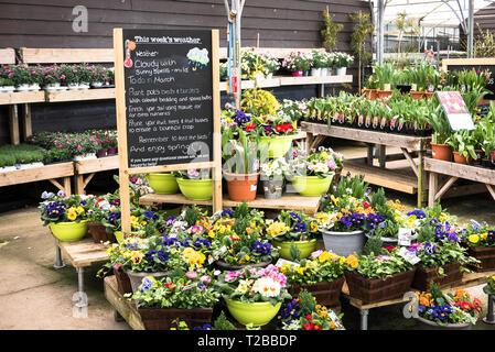 Hilfreiche Hinweise für die Arbeit im Garten in einem Englischen Garten Center im Frühjahr UK - Stockfoto