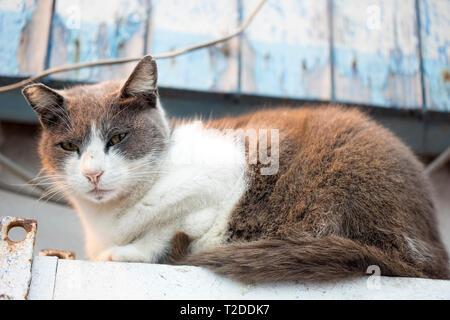 Katze schlafen in Fischerdorf, Marokko - Stockfoto