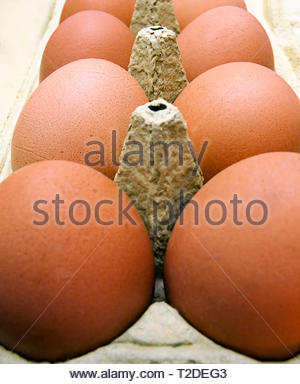Nahaufnahme der viele frische braune Eier im Karton - Stockfoto