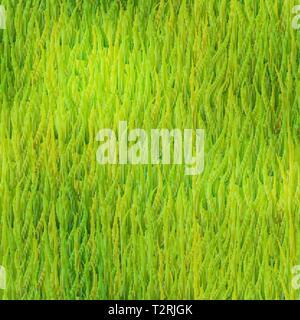 Helle detaillierte grünes Gras, üppigen sommer wiese nahtlose Muster - Stockfoto