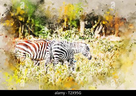 Pack von Zebras grasen in Savanne mit grünen Rasen Hintergrund - Stockfoto