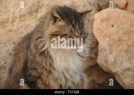 Eine Katze sitzt auf einem Strand - Stockfoto