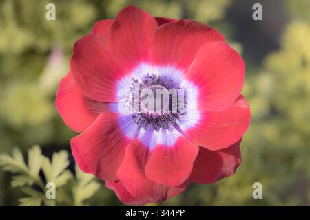 Bunte Garten Blumen Nahaufnahme Makroaufnahme Fotografie