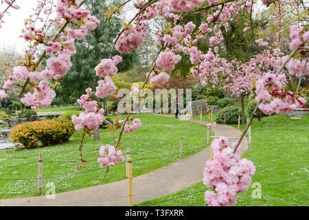 Die Kyoto Japanischer Garten in Holland Park, Holland Park Avenue, Kensington, London, W11, Großbritannien - Stockfoto