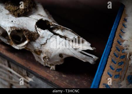 Alte Tier Schädel Festlegung in einem Haus - Abgebrochene Knochen - Stockfoto