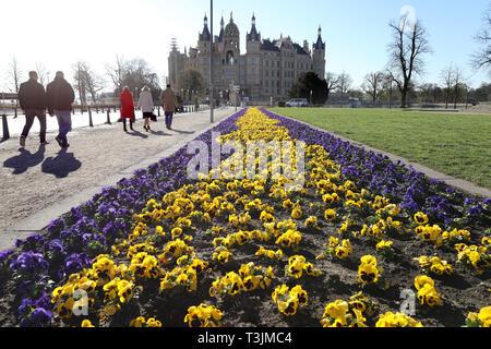 Schwerin, Deutschland. 10 Apr, 2019. Stiefmütterchen blühen in den Alten Garten vor dem Schweriner Schloss. Quelle: Bernd Wüstneck/dpa-Zentralbild/ZB/dpa/Alamy leben Nachrichten - Stockfoto