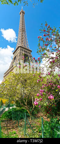 Frühling in Paris. Blüte pink Magnolia und Eiffelturm. Fokus auf magnolienbaum - Stockfoto