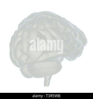 3D-Darstellung des menschlichen Gehirns - Stockfoto
