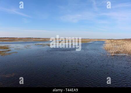 Anzeigen von Sümpfen, Kładka Waniewo - Śliwno, Narwianski Nationalparks (Narwiański Park Narodowy), Podlasien, Polen - Stockfoto
