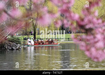 Frühling Kirschblüten im Boston Public Garden mit der ikonischen Swan Yachten in der Lagune, Back Bay, Boston, Massachusetts, USA - Stockfoto