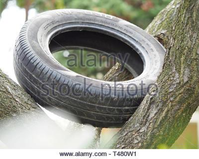 Ansicht eines Reifens auf ein Baum - Stockfoto