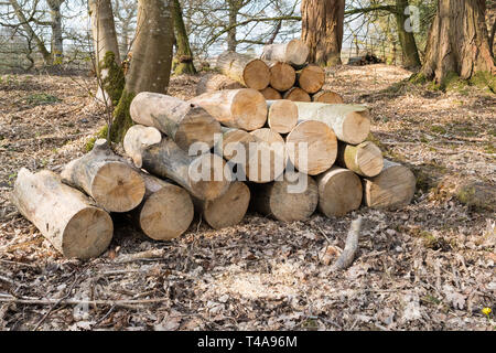 Stapel der Protokolle in Woodland-uk - Stockfoto