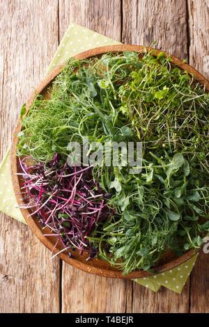 Micro grün Mix aus Erbsen, Koriander, Senf, Ölrettich close-up auf einem Teller auf den Tisch. Vertikal oben Ansicht von oben