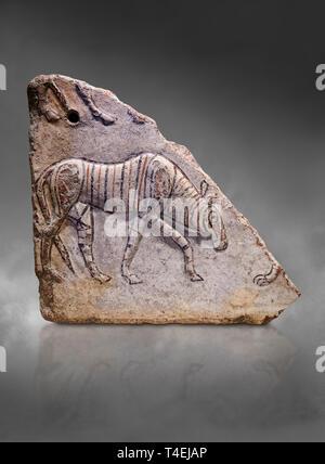 Phrygische relief Fragment zeigt eine wandern Tier. 8th-7th century BC. Çorum Archäologische Museum, Corum, Türkei - Stockfoto