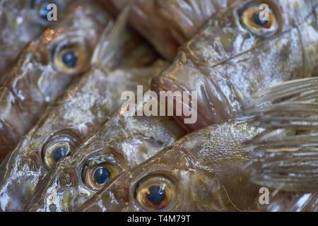 Nahaufnahme von Fisch Augen (John Dory) starrt in einen Fischmarkt in Marokko (Tanger), Nordafrika Stockfoto