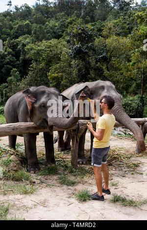 Man füttern Elefanten in einem Elephant Sanctuary. Chiang Mai, Thailand. - Stockfoto