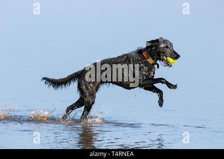 Southport, Merseyside, UK. 19. April 2019. Hunde Tag heraus. Auf einem herrlich warmen und sonnigen Karfreitag, Hunde haben den besten Tag überhaupt, wie Sie spielen und kühlen Sie sich in einem Pool von Wasser am Strand in Southport, Merseyside. Credit: cernan Elias/Alamy leben Nachrichten - Stockfoto