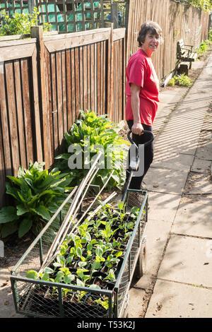 Weibliche Gärtner Ziehen einer Katze mit Saatgut Fächer an ihrer Zuteilung, England, Großbritannien - Stockfoto