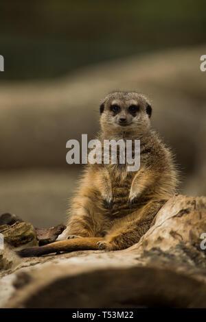 Tiere im Zoo - Stockfoto