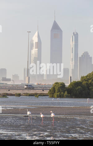 UAE, Dubai, Dubai Creek (Khor Dubai), Ras Al-Khor Wildlife Sanctuary, Flamingo (Phoenicopterus Roseus) und die Skyline der Stadt. - Stockfoto