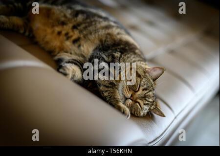 Liebe Katzen schlafen in Sofa süße Katze - Stockfoto