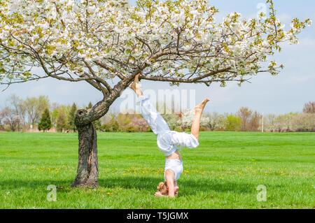 Schöne Frau ist Yoga, Salamba Sirsasana übung, stehen im Kopfstand Pose in der Nähe von Blüten Baum im Park. - Stockfoto