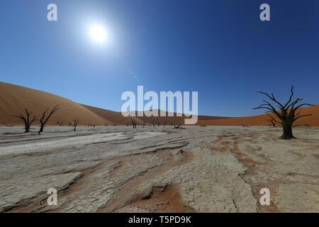 Deadvlei ist eine Salz- und Tonpfanne, die von hohen roten Dünen umgeben ist und sich im südlichen Teil der Namib-Wüste befindet.