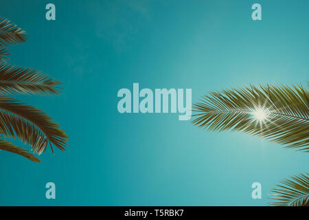 Vintage Farbe getonte Palmen Blätter und Clean Sky mit strahlenden Sonne Hintergrund - Stockfoto