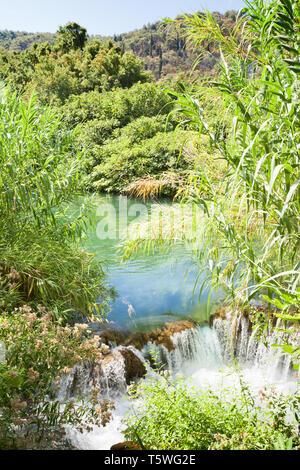 Krka, Sibenik, Kroatien, Europa - Wasser Reed an einem kleinen Wasserfall im Nationalpark Krka - Stockfoto
