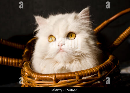 Kleine Katze im Korb - Stockfoto