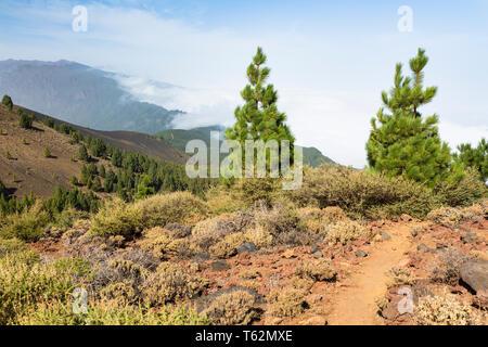 Bunte Bäume und rote Lava Landschaft über den Wolken entlang der Ruta de los Volcanes Trail in La Palma, Spanien. - Stockfoto