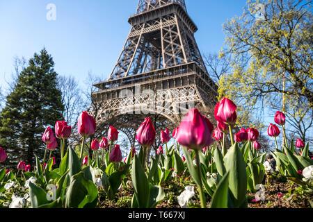 Frühling mit Tulpen vor dem Eiffelturm in Paris, Frankreich | Frühling mit Tulpen auf dem Eiffelturm, Paris, Frankreich - Stockfoto