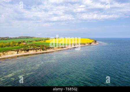 An der Steilküste von Boltenhagen der Raps blüht in hellem Gelb - Stockfoto