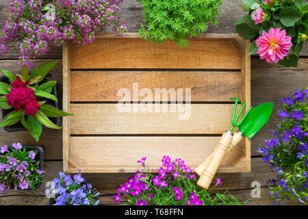 Holz- Fach und mehrere Garten Blumen in Töpfe. Ansicht von oben. - Stockfoto