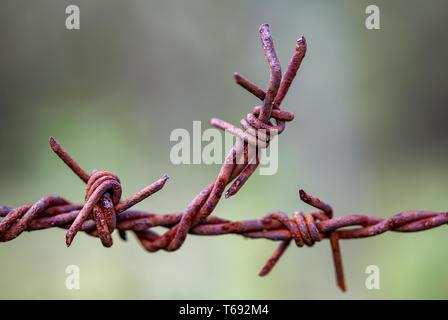 Makrofotografie eines Stück aus verrostetem Stacheldraht in Zäune in der Landschaft der Anden der zentralen Kolumbien verwendet. - Stockfoto
