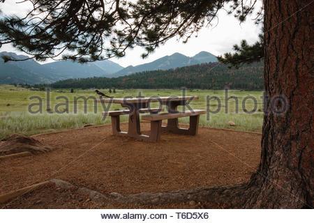 Wie der Himmel mehr mit einem drohenden regen Sturm grau wird, ein einsamer Magpie ist auf ein einsames Picknick Tisch unter einer großen Ponderosa Pine entfernt thront t - Stockfoto