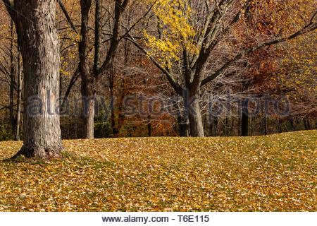 Ahornblätter decken die grasbewachsenen Picknickplatz hang Anfang November, als die meisten Blätter von den Bäumen innerhalb der Pike See Gerät gefallen sind, Ket - Stockfoto