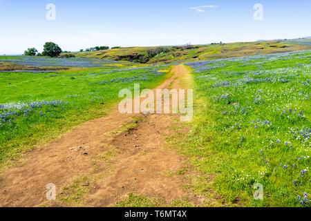 Wanderweg durch Felder Wildblumen bedeckt, Nord Tabelle Ecological Reserve, Oroville, Kalifornien - Stockfoto