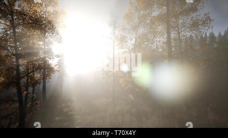 Sun durch Pinien im Bergwald Glänzend