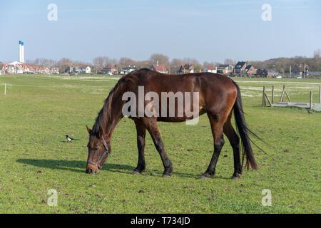 Das junge Pferd, auf einer Sommerwiese gestreift ist. - Stockfoto