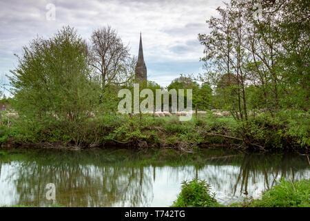 Die Kathedrale von Salisbury gesehen aus der Entfernung mit schafbeweidung im Vordergrund. - Stockfoto